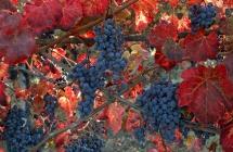 Il prestigioso Times incorona l'Emilia Romagna tra le prime mete enogastronomiche d'autunno