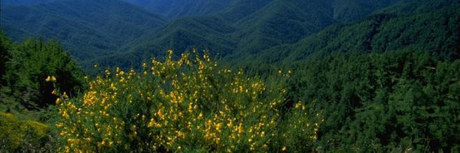 Si rinnova l'accordo triennale tra Parco Foreste Casentinesi e Apt Servizi ER