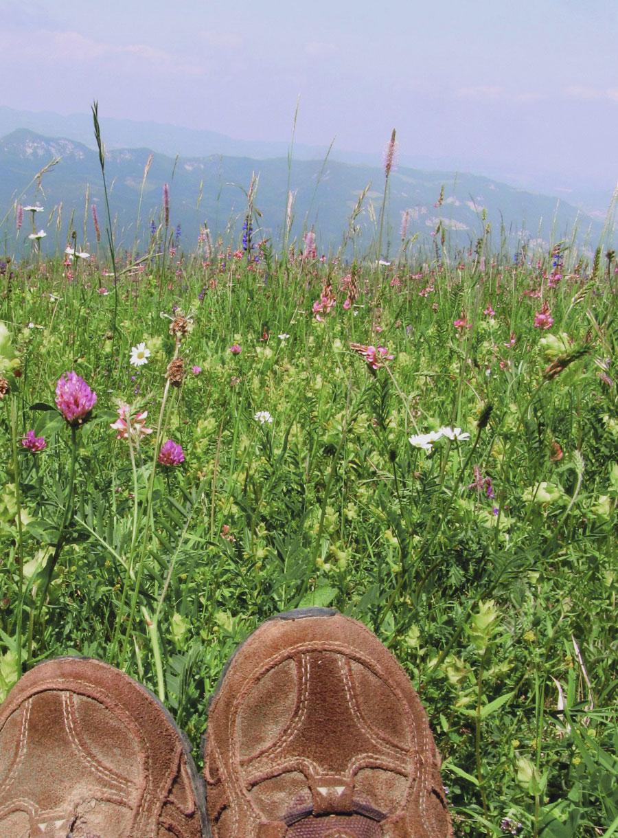 Il 2 giugno in Emilia Romagna è la Giornata Verde: trekking, escursioni, uscite in bici e in barca