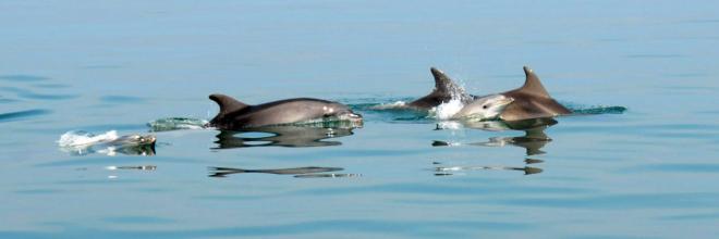 La straordinaria biodiversità del mare e delle zone umide Due eventi per la promozione e la comunicazione turistica