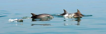 La straordinaria biodiversità del mare e delle zone umide risorsa per la promozione e la comunicazione turistica