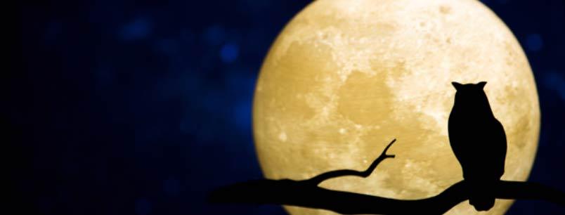 Lo sbarco sulla Luna festeggia i 50 anni