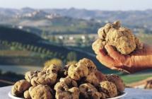 Parte l'autunno enogastronomico in Emilia-Romagna