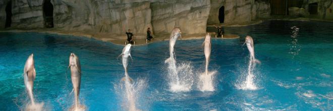 Il 15 giugno riaprono i parchi divertimento della Riviera Romagnola: Emozioni, tuffi, adrenalina e tantissime novità
